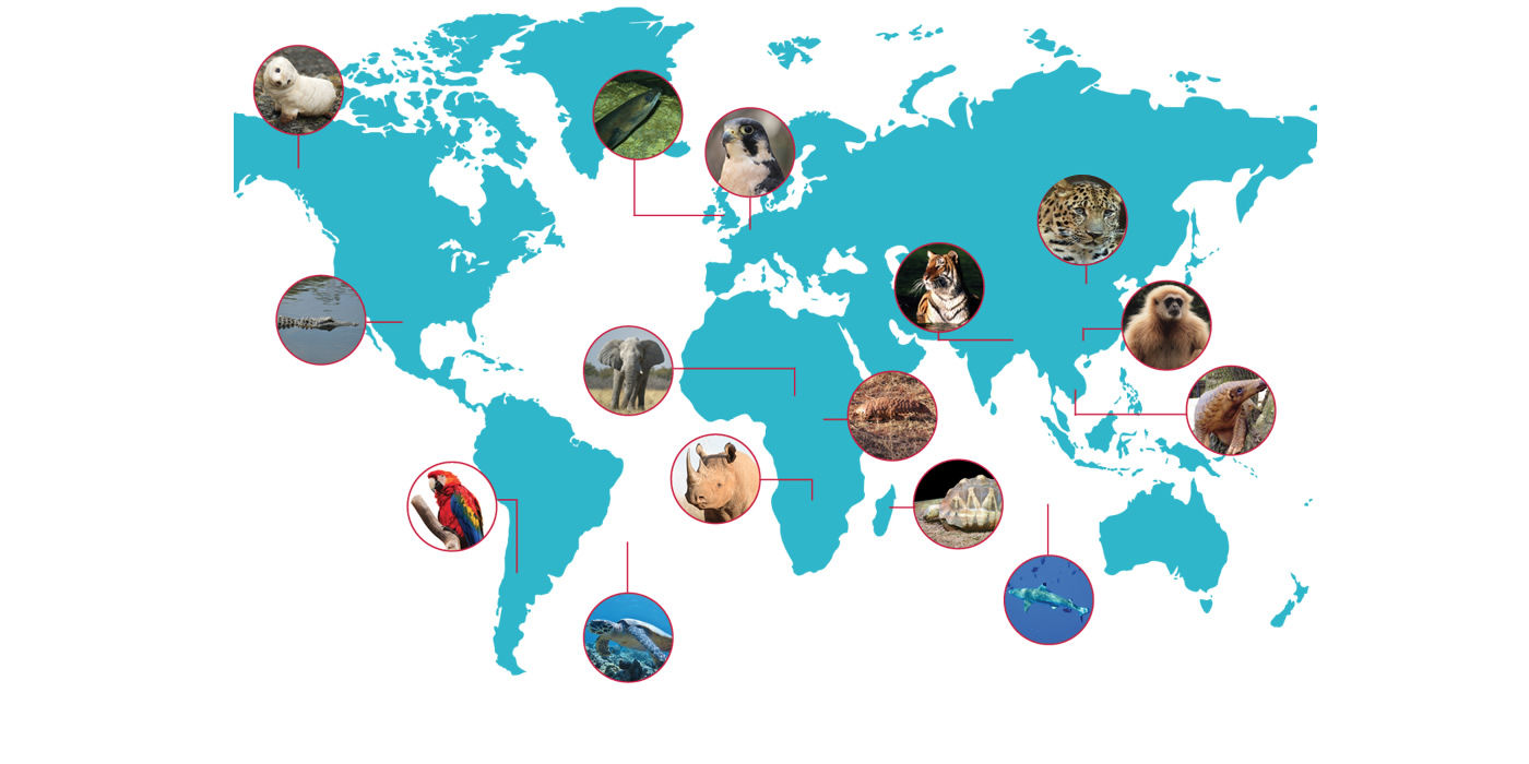 How to Identify a Wildlife Trafficker