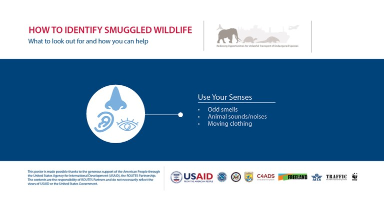 How to Identify a Wildlife Trafficker: Use Your Senses - Horizontal