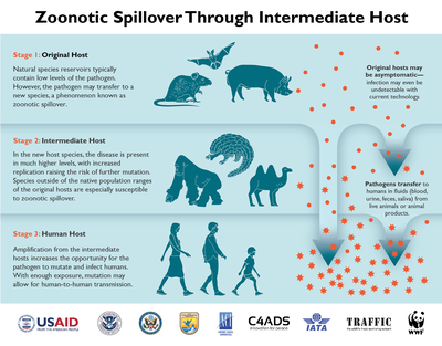 Zoonotic Disease Spillover.png