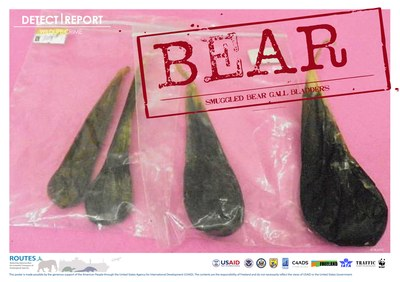 ROUTES Detect and Report Bear Awareness Poster
