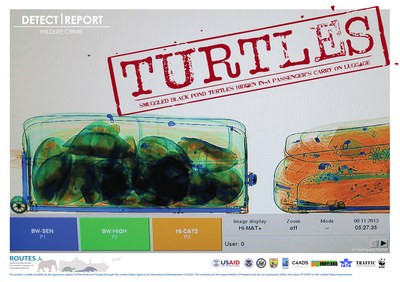 ROUTES Detect and Report Turtles Stamp Awareness Poster