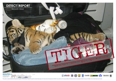 ROUTES Detect and Report Tiger Cub Stamp Awareness poster