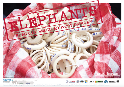 ROUTES Detect and Report Ivory Awareness Poster