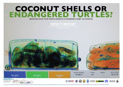 ROUTES Detect and Report Turtle Shells Awareness Poster
