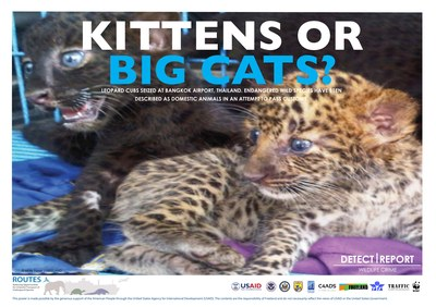 ROUTES Detect and Report Big Cats Awareness Poster