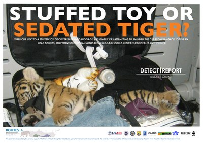 ROUTES Detect and Report Tiger Cub Awareness Poster