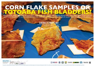 ROUTES Detect and Report Fish Awareness Poster