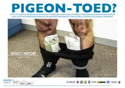 ROUTES Detect and Report Smuggling Awareness Poster