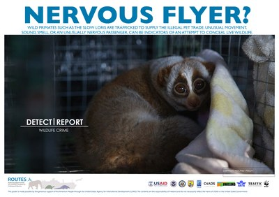 ROUTES Detect and Report Loris Awareness Poster