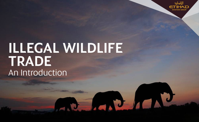 Etihad Airways Develops Industry E-Learning Course to Combat Wildlife Trafficking