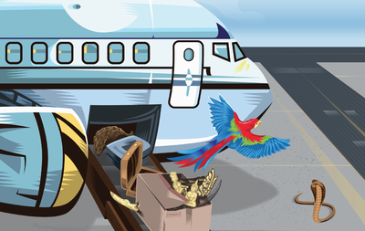 Wildlife Traffickers Exploiting Vulnerabilities in the Air Transport Sector Worldwide